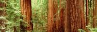 "27"" x 9"" Redwood"