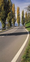 """Switzerland, Lake Zug, View of Populus Trees lining a road by Panoramic Images - 9"""" x 27"""""""