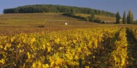 """Vineyard on a landscape, Bourgogne, France by Panoramic Images - 27"""" x 9"""""""