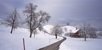 """Switzerland, Canton of Zug, Linden trees on a snow covered landscape by Panoramic Images - 27"""" x 9"""""""