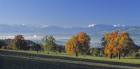 Switzerland, Reusstal, Panoramic view of Pear trees in the Swiss Midlands Fine Art Print