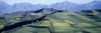 Fields Farm Qinghai Province China
