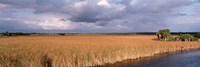 """USA, Florida, Big Cypress National Preserve along Tamiami Trail Everglades National Park by Panoramic Images - 27"""" x 9"""""""