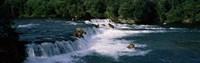 "Bears fish Brooks Fall Katmai AK by Panoramic Images - 27"" x 9"""