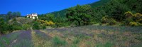 """Lavender Field La Drome Provence France by Panoramic Images - 27"""" x 9"""""""