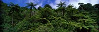 """Rain forest Paparoa National Park S Island New Zealand by Panoramic Images - 27"""" x 9"""""""