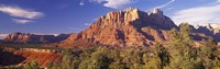 "Canyon surrounded with forest, Escalante Canyon, Zion National Park, Washington County, Utah, USA by Panoramic Images - 27"" x 9"""