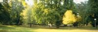 Trees in a park, Wiesbaden, Rhine River, Germany Fine Art Print