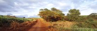 "Dirt road passing through a agricultural field, Kauai, Hawaii, USA by Panoramic Images - 27"" x 9"" - $28.99"