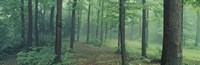 """Chestnut Ridge Park, Orchard Park, New York State by Panoramic Images - 27"""" x 9"""""""