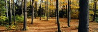"""Chestnut Ridge Park Orchard Park NY USA by Panoramic Images - 27"""" x 9"""""""