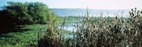 "Plants in a marsh, Arcata Marsh, Arcata, Humboldt County, California, USA by Panoramic Images - 27"" x 9"""