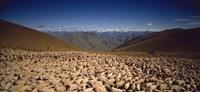 Sheep Otago New Zealand