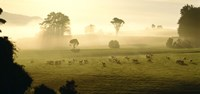 """Farmland & Sheep Southland New Zealand by Panoramic Images - 27"""" x 9"""""""