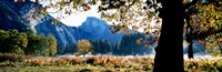 "Half Dome, Yosemite National Park, California, USA by Panoramic Images - 27"" x 9"""