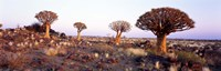 """Quiver Trees Namibia Africa by Panoramic Images - 27"""" x 9"""""""