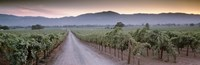 Road in a vineyard, Napa Valley, California, USA Fine Art Print