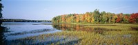"Trees in a forest at the lakeside, Ontario, Canada by Panoramic Images - 27"" x 9"" - $28.99"