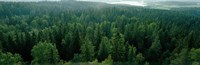 """Finland, Aulanko, Scandinavian Forest by Panoramic Images - 27"""" x 9"""", FulcrumGallery.com brand"""