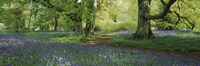 """Bluebells in a forest, Thorp Perrow Arboretum, North Yorkshire, England by Panoramic Images - 27"""" x 9"""", FulcrumGallery.com brand"""