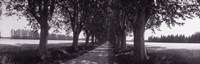 "Road Through Trees, Provence, France by Panoramic Images - 27"" x 9"", FulcrumGallery.com brand"