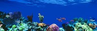 """Underwater, Caribbean Sea by Panoramic Images - 27"""" x 9"""""""