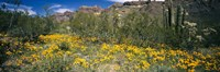"""Flowers in a field, Organ Pipe Cactus National Monument, Arizona, USA by Panoramic Images - 27"""" x 9"""", FulcrumGallery.com brand"""