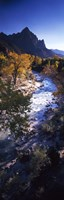 "High angle view of a river flowing through a forest, Virgin River, Zion National Park, Utah, USA by Panoramic Images - 9"" x 27"""