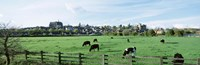 """Cows grazing in a field with a city in the background, Arundel, Sussex, West Sussex, England by Panoramic Images - 27"""" x 9"""", FulcrumGallery.com brand"""