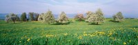"""Peartrees Fields Aargau Switzerland by Panoramic Images - 27"""" x 9"""" - $28.99"""