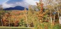 Trees on a field in front of a mountain, Mount Washington, White Mountain National Forest, Bartlett, New Hampshire, USA Fine Art Print