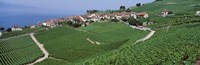 Vineyards Overlooking Lake Geneva Switzerland