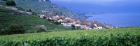 "Vineyards, Rivaz, Switzerland by Panoramic Images - 27"" x 9"""