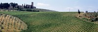 "Vineyards and Olive Grove outside San Gimignano Tuscany Italy by Panoramic Images - 27"" x 9"""