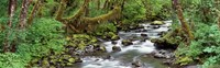 """Creek Olympic National Park WA USA by Panoramic Images - 27"""" x 9"""""""