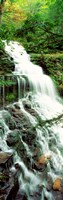 "Ganoga Falls Ricketts Glenn State Park PA by Panoramic Images - 9"" x 27"""