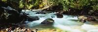 Mountain Stream CO USA