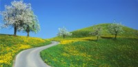 """Winding Road Canton Switzerland by Panoramic Images - 27"""" x 9"""""""