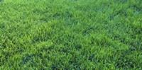 Grass Sacramento CA USA
