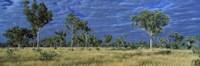 "Savannah Bungle Bungle Australia by Panoramic Images - 27"" x 9"" - $28.99"