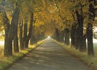 Road w/Autumn Trees Sweden