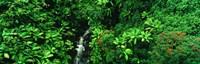 "Hamakua Coast, Hawaii, Hawaii, USA by Panoramic Images - 27"" x 9"", FulcrumGallery.com brand"