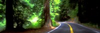 Road Redwoods Mendocino County California USA