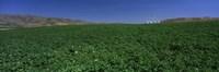 USA, Idaho, Burley, Potato field surrounded by mountains Fine Art Print