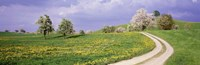 """Meadow Of Dandelions, Zug, Switzerland by Panoramic Images - 27"""" x 9"""""""