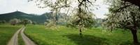 Meadow Of Dandelions Zug Switzerland