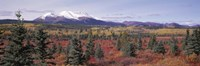 "Canada, Yukon Territory, View of pines trees in a valley by Panoramic Images - 27"" x 9"""