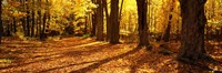 Tree Lined Road Massachusetts USA