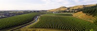 """Mission Vineyard, Hawkes Bay North Island, New Zealand by Panoramic Images - 27"""" x 9"""""""