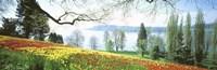 Lake Constance Insel Mainau Germany